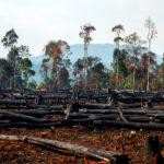 Comment la technologie peut-elle favoriser la lutte contre les feux de forêt ?
